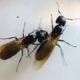 Carpenter Ants can hurt Log Homes